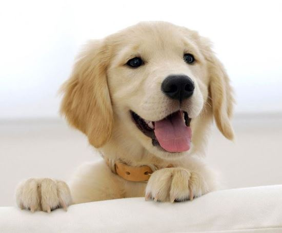 Picture of Pet Happiness Basics Plan
